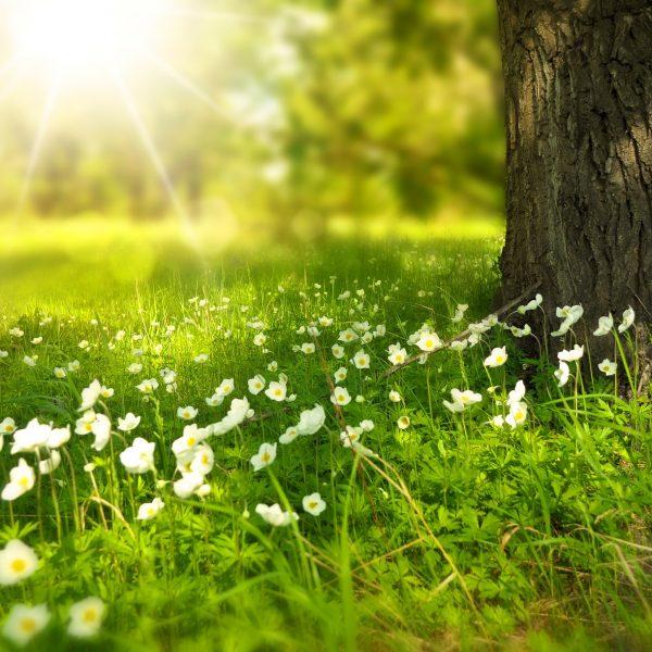 arbre-printemps-calme